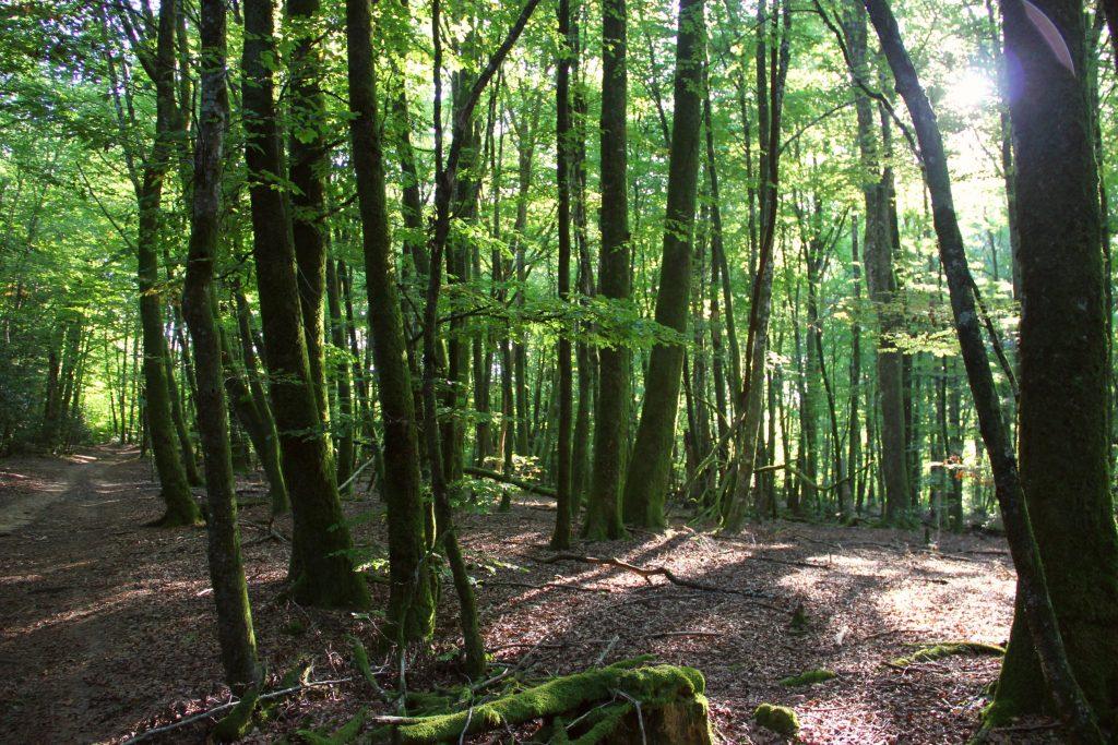 Une parcelle forestière que l'association souhaitait acquérir