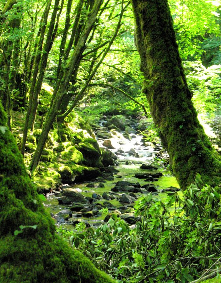 Une belle forêt vivante