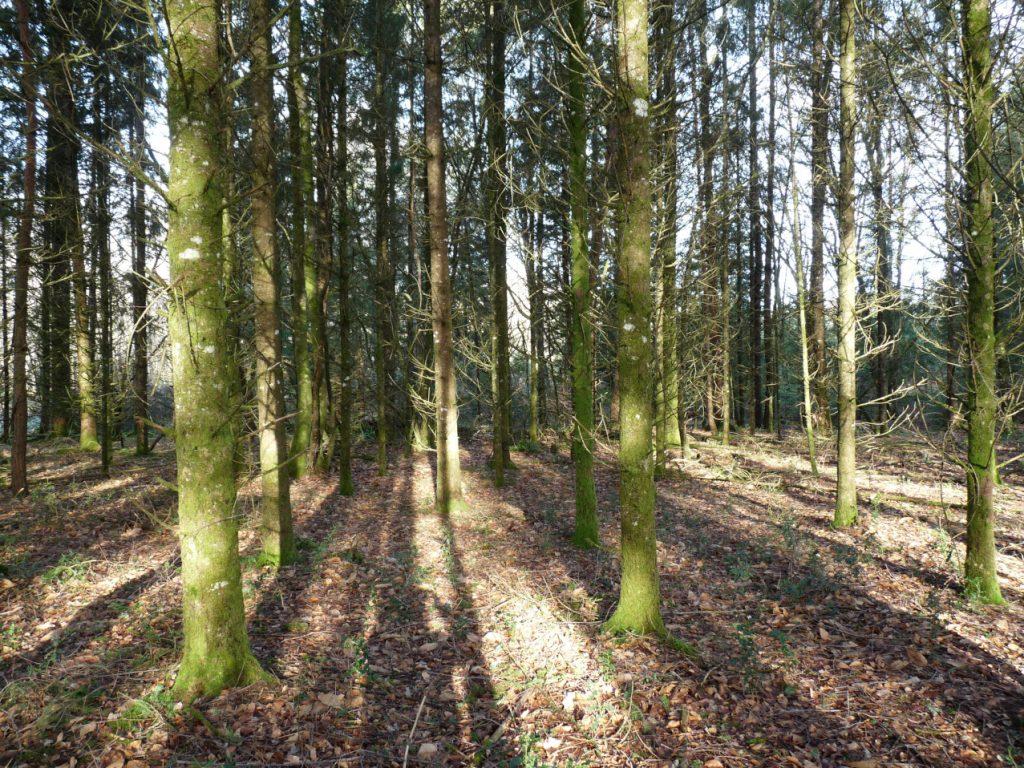 une plantation en monoculture