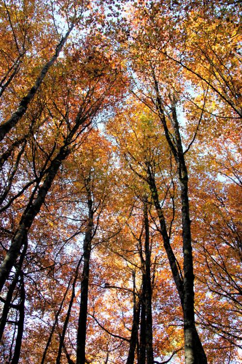 Une forêt d'automne